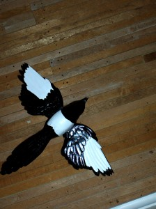 Magpie with wings